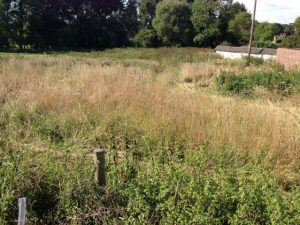 Using the herd to manage rough grassland (before)