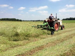 Turning hay to help it dry out