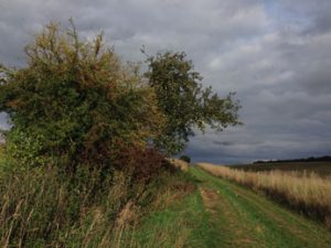 Wild hedgerows provide great habitats.