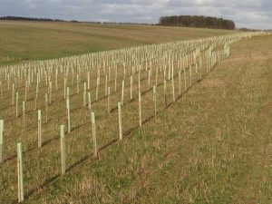 In January 2014, in partnership with the Woodland Trust, we planted 15,000 trees.
